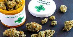 Medical Cannabis Referrals